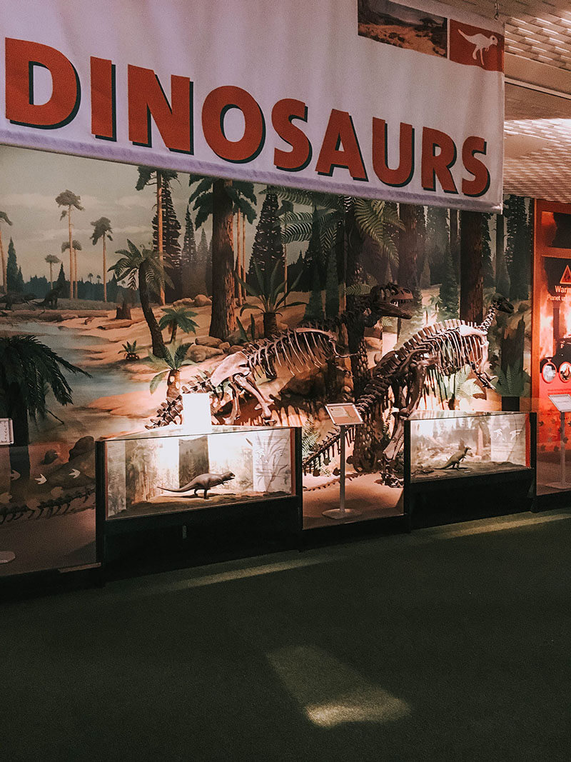 World museum liverpool, dinosaur exxhibit